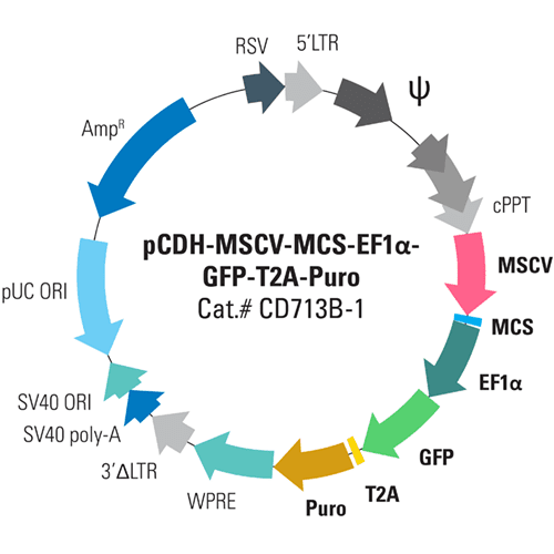pCDH-MSCV-MCS-EF1α-GFP+Puro Cloning and Expression Lentivector