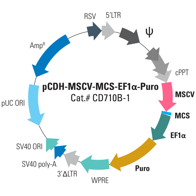 pCDH-MSCV-MCS-EF1α-Puro Cloning and Expression Lentivector