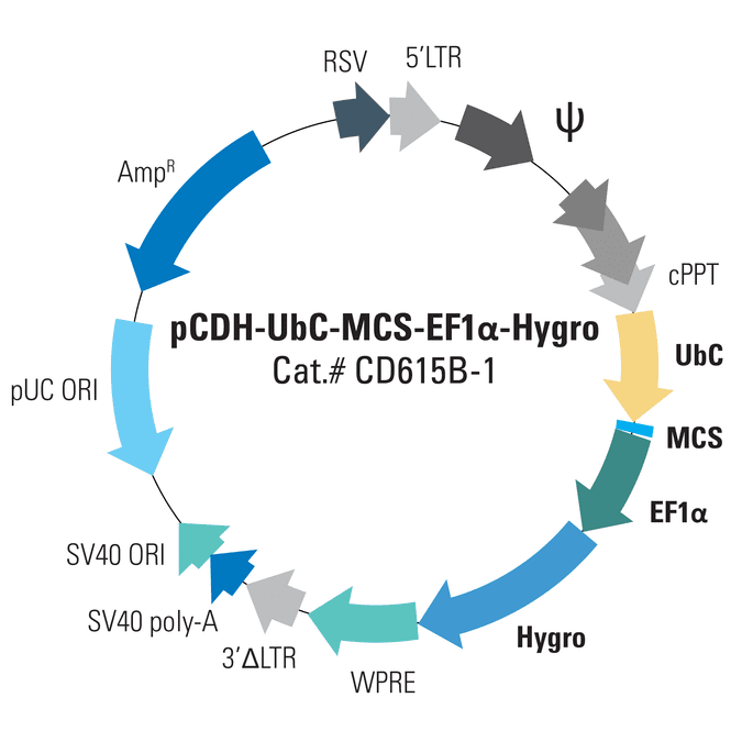 pCDH-UbC-MCS-EF1α-Hygro Cloning and Expression Lentivector
