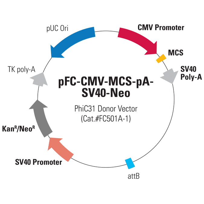 pFC-CMV-MCS-pA-SV40-Neo PhiC31 Donor Vector