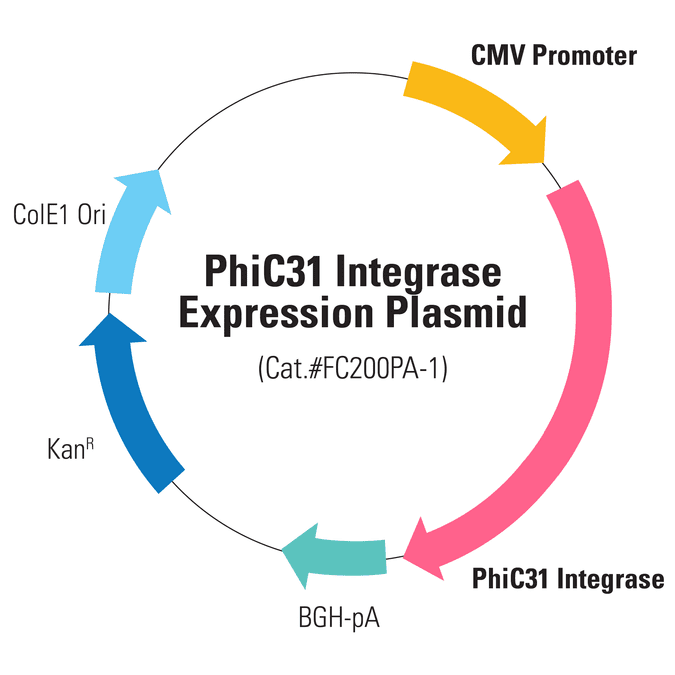 PhiC31 Integrase Expression Plasmid