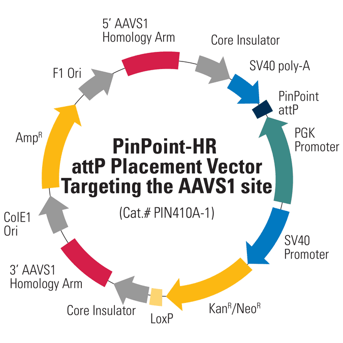 PinPoint-HR attP Placement Vector Targeting AAVS1
