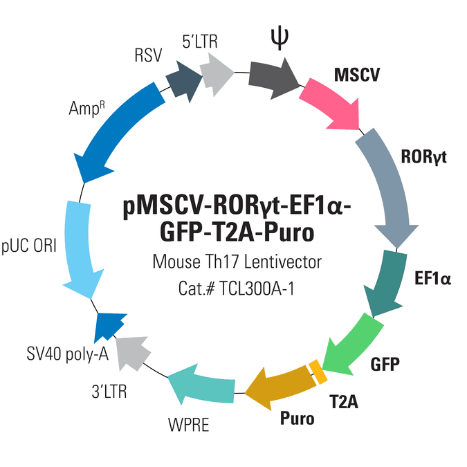 pMSCV-Mouse RORγt-EF1α-GFP-T2A-Puro for RORγt Overexpression