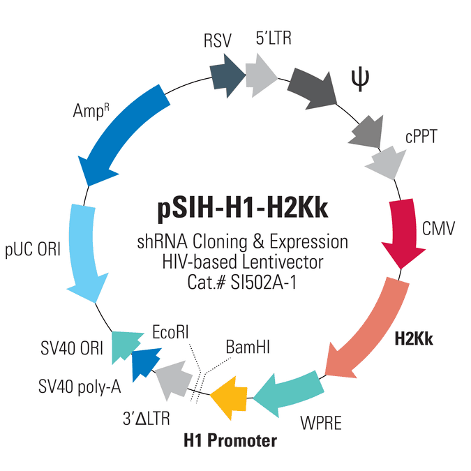 pSIH1-H1-H2Kk Cloning and Expression Lentivector