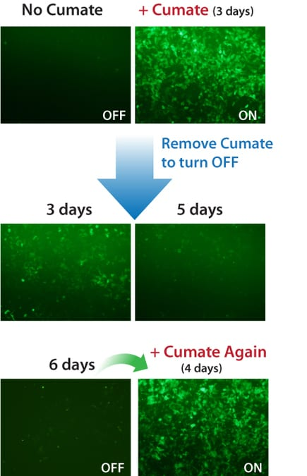 Gene expression with the SparQ Cumate Switch System can be turned on and off, then on again.