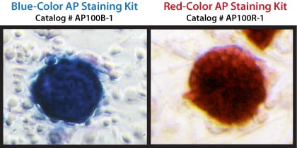 Stain pluripotent cells either blue or red with SBI's AP Staining Kits