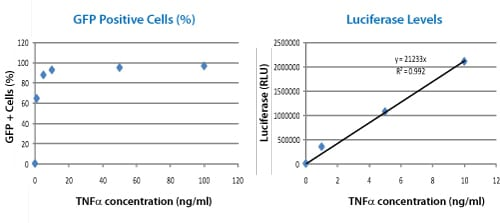 Quantitate NF-κB Activation with luciferase assays
