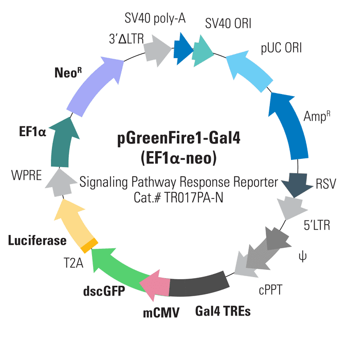 pGreenFire1-Gal4 (EF1α-neo) Lentivector