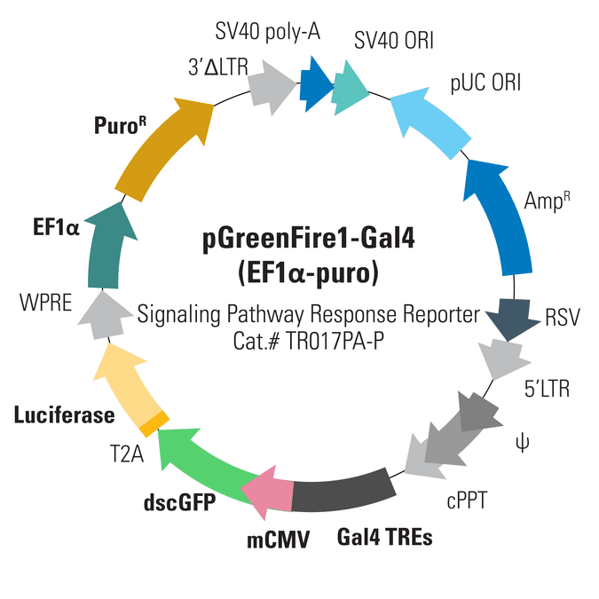 pGreenFire1-Gal4 (EF1α-puro) Lentivector