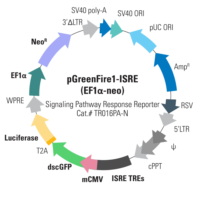 pGreenFire1-ISRE (EF1α-neo) Lentivector