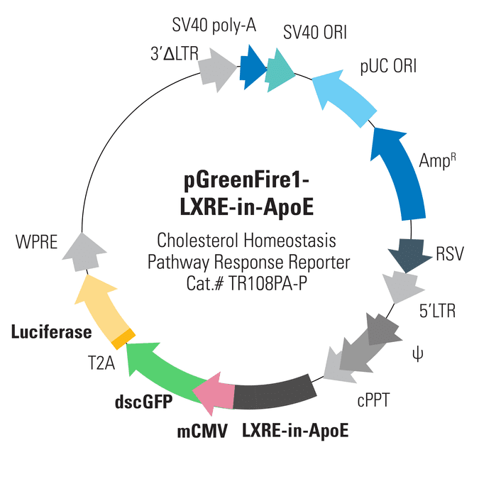 pGreenFire1-LXRE-in-ApoE Lentivector