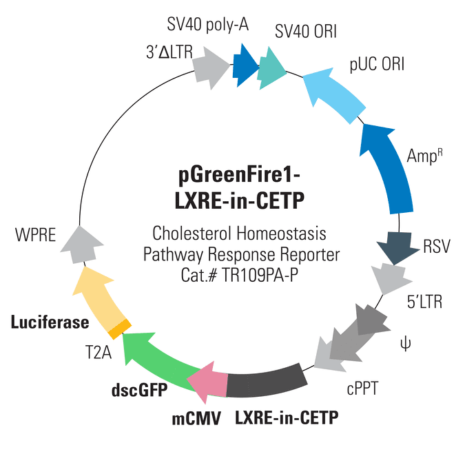 pGreenFire1-LXRE-in-CETP Lentivector