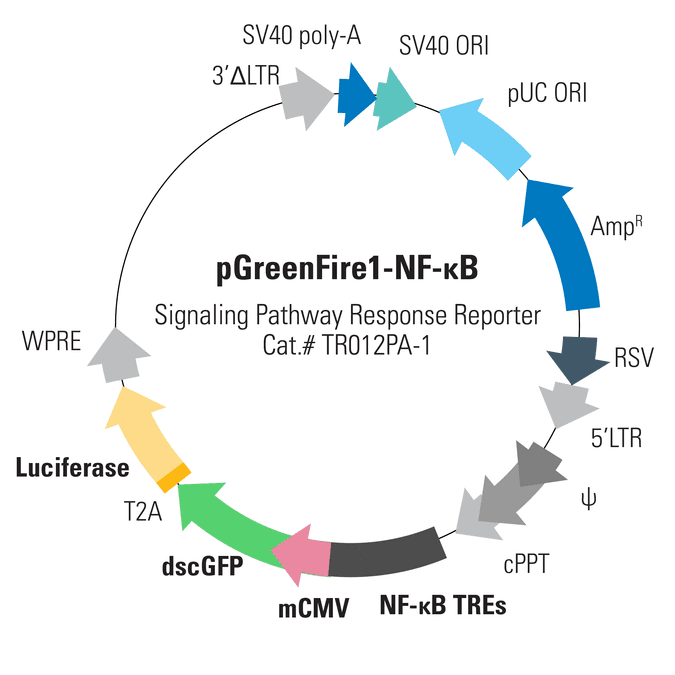 Pgreenfire1 Nf B Lentivector System Biosciences