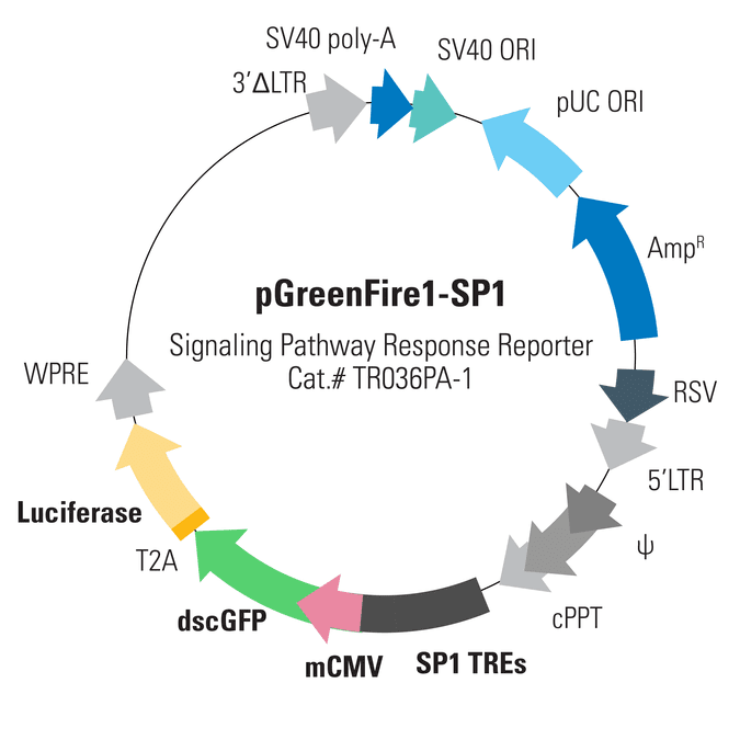 pGreenFire1-SP1 Lentivector