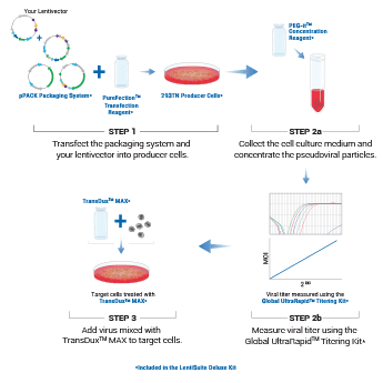 The LentiSuite Deluxe Kit includes optimized reagents for large-scale lentivirus production when quantitative titer information is not needed.