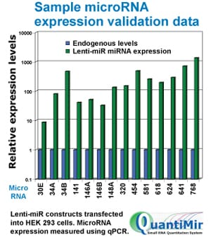 Lenti-miRs are overexpressed in HEK293 cells