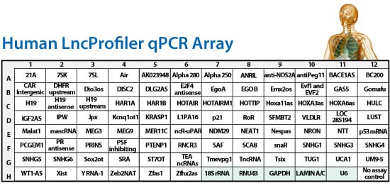 LncRNA Profiler qPCR Array Kit (Human)