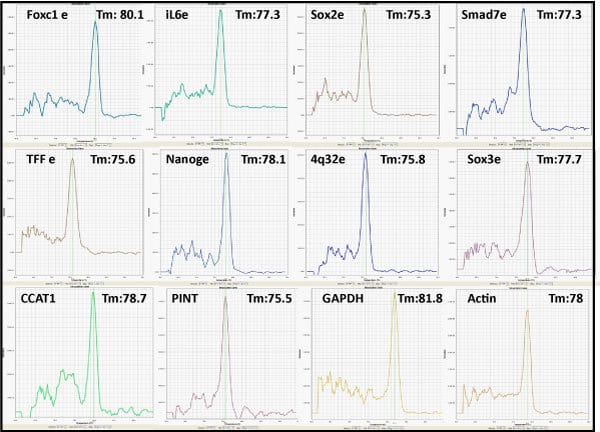 Regulatory RNA qPCR Profiler