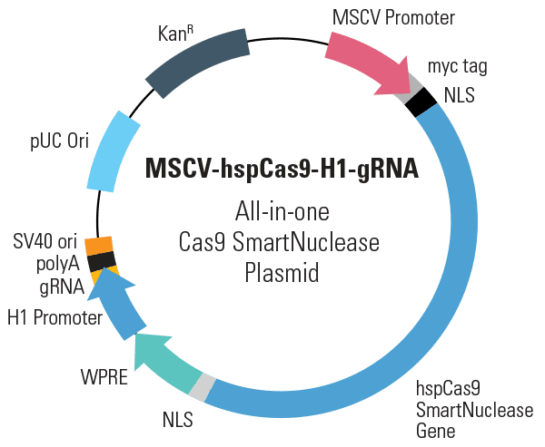 MSCV-hspCas9-H1-gRNA All-in-one Cas9 SmartNuclease Plasmid (circular)