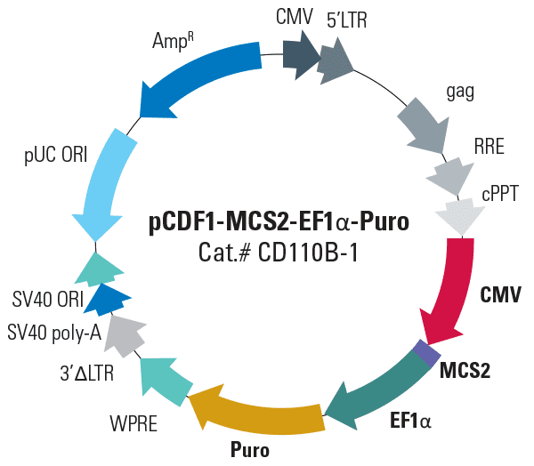 pCDF1-MCS2-EF1α-Puro Cloning and Expression Lentivector