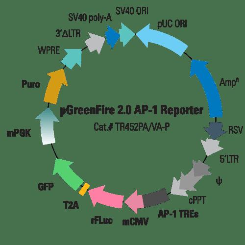 pGreenFire 2.0 AP-1 Lentivector