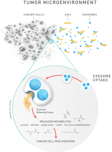 Exosomes affect metabolism in cancer cells